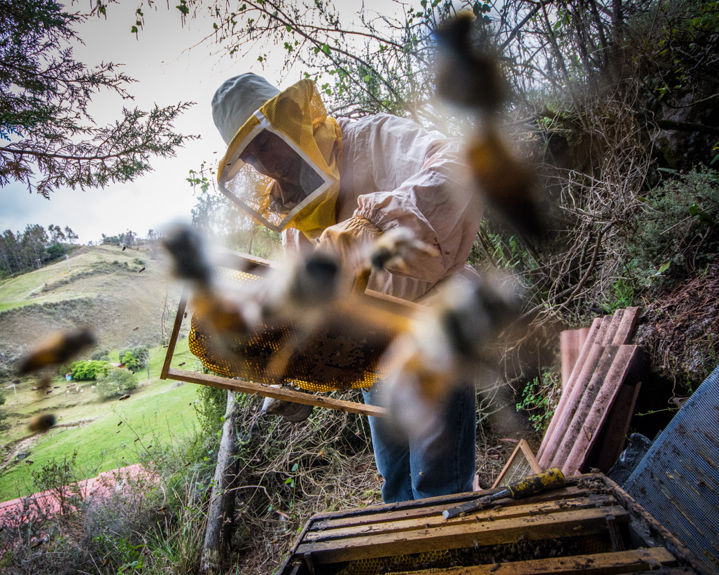 Working in a Cloud of Bees